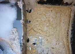ゴキブリ(油脂上に黒く浮かんでいる)の温床